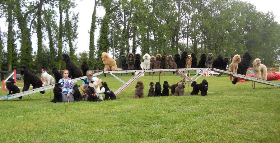 groupe chien trophee caniches